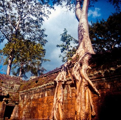 Камбоджа. Та Пром. [Cambodia. Ta Prohm.]