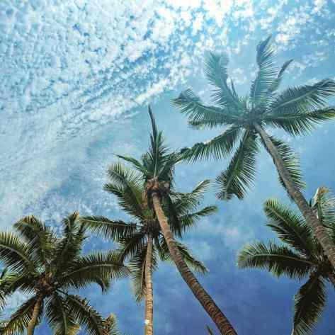 Остров Контадора. Панама. [Contadora Island. Panama.]